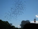 Flock of doves released during the ceremony